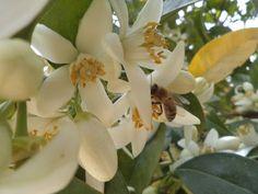 ...Ύστερα ήρθαν οι μέλισσες...