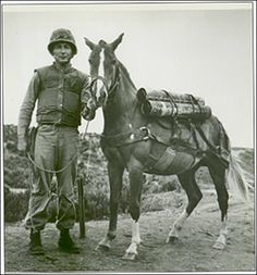 Reckless: The History Behind A Real American War Horse