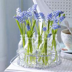 Tavaszi kékség – a gyöngyike