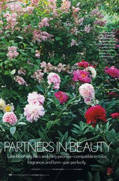 (BH 9/2006) Peonies & Lilacs: Fragrance in Late Spring & They Pair Well Planted Together | AllTogetherChanin