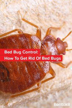 bed bug bite infographic bed bugs pinterest bed bugs bites and bug bite. Black Bedroom Furniture Sets. Home Design Ideas