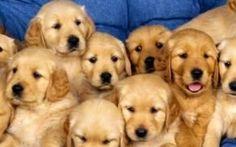 SweetPee, lo spray che permette di pulire la pipì del cane in modo naturale: come funziona Da Piacenza arriva un rimedio semplice e naturale per combattere questo problema. L'idea è venuta a quattro amiche della città emiliana, le quali hanno inventato uno spray il cui nome è tutto un prog #sweetpee #cani #animali