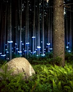 Some really nice examples of light installation art. Via Colossal: Landscape Light Sculptures Artist Barry Underwood photographs wonderfully mysterious Landscape Lighting, Landscape Art, Landscape Architecture, Landscape Design, Landscape Photography, Forest Landscape, Exposure Photography, Light Photography, Light Painting