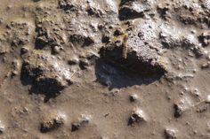Boden Matsch Photoshop, Desserts, Food, Mud, Boden, Tailgate Desserts, Deserts, Essen, Postres