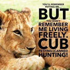Please choose to never pet lion cubs! By petting a cub, you are aiding canned hunting! More info on www.knuffelfarms.nl.