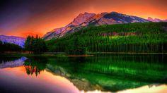 Natures vibrancy viewed....
