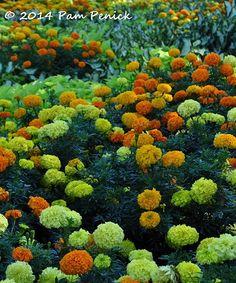 Dallas Arboretum, Fall, Autumn, Dallas Arboretum and Botanical Garden, Dallas, Garden, Digging
