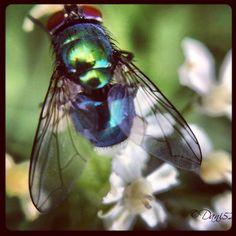 Macro bug Foto Daniela Libralon  Campolasalza Massello