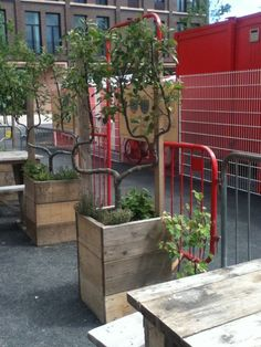 Espalier fruit trees in planters from reclaimed scaffolding boards Skip Garden, London N1