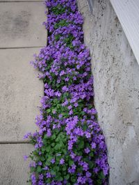 I've decided I don't like grass ... looking for alternate groundcover ... would prefer something that flowers :)