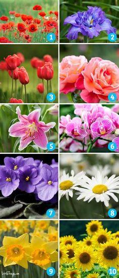 Személyiségteszt a tavasz legszebb virágaival
