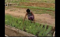 Hortas comunitárias são opção de renda para 1,9 mil famílias em Teresina