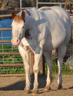 Ranch! Winchester Shotgun, Paint Horses, Horses For Sale, Palomino, Horse Care, Beautiful Horses, Mustang, Ranch, Funny Pictures