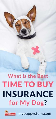 What Should I Know Before Getting Pet Insurance? - My Puppy Story