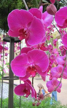 Orchid Extravaganza ~ Longwood Gardens, PA