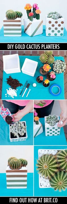 DIY Basics: Gold Patterned Cactus Planters | Brit + Co.