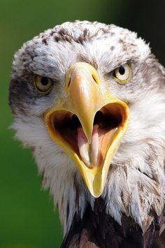 Wow! What a shot! See eagles at some of our camps too:http://www.classicsafaricamps.com
