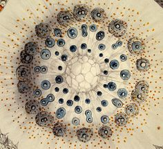 Talk about the find of the day. I stumbled across these illustrations by biologist, philosopher and artist Ernst Haeckel, and immediatel. Ernst Haeckel Art, North Rhine Westphalia, Natural Form Art, Microscopic Photography, Image Nature, Patterns In Nature, Sacred Geometry, Vintage Prints, Art Forms