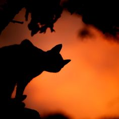Halloween is creeping up on us, what do you have planned for this spooktacular day? National Black Cat Day, Cats Of Instagram, Celestial, Explore, Orange, Halloween, Travel, Outdoor, Inspiration