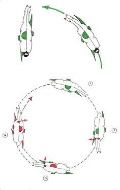 Abbildung 5: oben: Sitz des Reiters beim Angaloppieren im Rechtsgalopp und im Kontergalopp auf der linken Hand; unten: Erarbeiten des fliegenden Galoppwechsels von rechts nach links auf dem Zirkel.