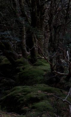 The forest at night....when the sun has relinquished it's hold and submitted to the ethereal beauty of the moon....