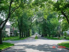 Luzerne Street, Westmont Borough, Johnstown, PA. The longest stand of American elms...well, anywhere.