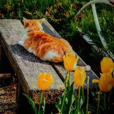 #愛猫同好会 #愛猫#愛#ぬこ部 #ぬこ様 #ぬこ#日常 #スナップ写真 #スナップ #アート#japan #写真家 #写真好きな人と繋がりたい #写真好きの人と繋がりたい #写真撮るの好きな人と繋がりたい #ねこ好きさんと繋がりたい #ねこ#猫写真#猫物語#ねこ部#野良猫#のらねこ#のらねこ部 #photo #cats #cat #neko  こちらも自由気ままに🎵日向ぼっこ中の猫である季節は😃🐱(*´∀`)である。
