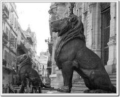 Les lions majestueux de la Mairie d'Oran