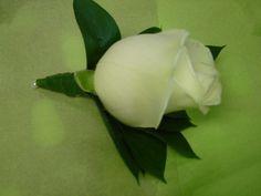White rose buttonhole