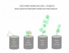 Instructional Materials by Elizabeth Chapin-Pinotti: FREEBIE! Harvest Science Lab - 2-4 Grades