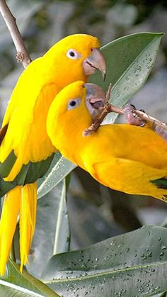 Resultado de imagem para beautiful birds in the world