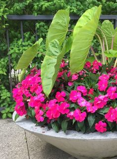 Planting Containers In June | Dirt Simple-New Guinea impatiens.