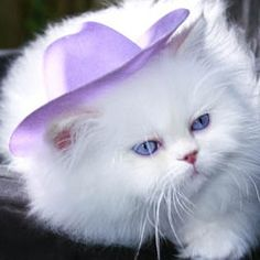 Cowgirl Kitty#cats #concept candie interiors #cat stuff