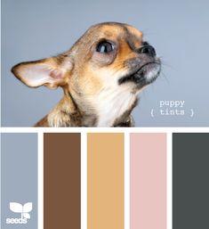 puppy tints
