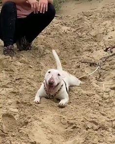 Animal Jokes, Funny Animal Memes, Funny Animal Videos, Funny Animal Pictures, Cute Funny Dogs, Cute Funny Animals, Cute Baby Animals, Animals And Pets, Bull Terrier Funny