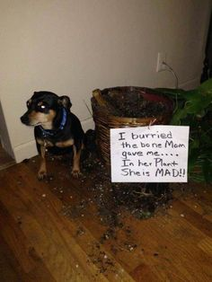 nice Hall Of Shame - Animal Version (28+ Pictures) #funnydogpictures