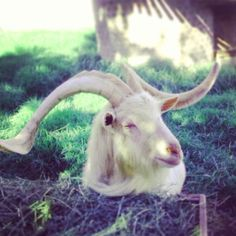 Goats, Mothers, Adventure, Awesome, Animals, Animales, Animaux, Adventure Game, Adventure Books