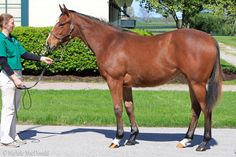 's full little sister has named Horse Racing, Race Horses, Triple Crown Winners, American Pharoah, Thoroughbred, Zebras, Little Sisters, Cats, Animals