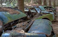 Crumpled: Rows of cars stand motionless between the trees in the atmospheric wood. Interesting article, awesome pictures!