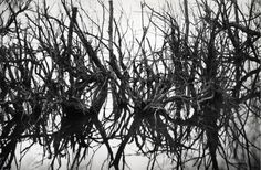 Hans Hartung, Photographie, Leica 35 30/31, 1959