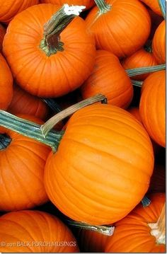 Pumpkins are native to North America. People make pumpkin pie as traditional part of Thanksgiving. And people also use pumpkins to carve Jack o lanterns on halloween.