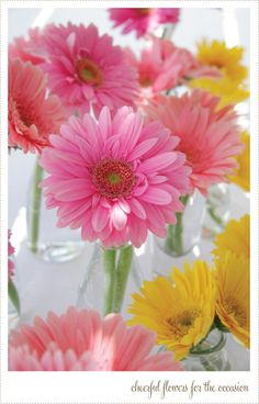 Gerbera daisies are the floral version of a smile. Flowers Nature, My Flower, Colorful Flowers, Pink Flowers, Beautiful Flowers, Happy Flowers, Daisy Love, Gerber Daisies, Floral Arrangements