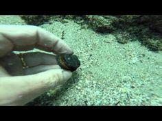 Arqueólogos encontram navio da frota de Vasco da Gama na costa de Omã