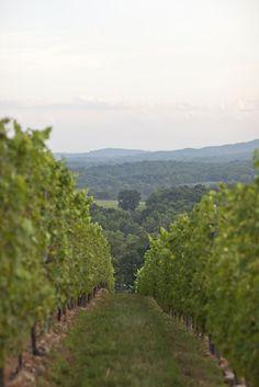 Touring Virginia's Vineyards