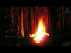 Forest Night Sounds Of Owls Campfire Crickets Wolves And Other Creatures Of The Dark - YouTube