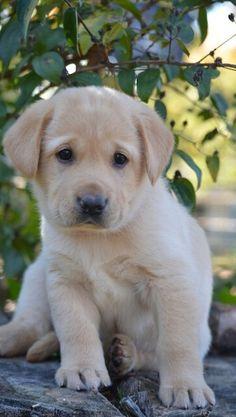 puppy love....