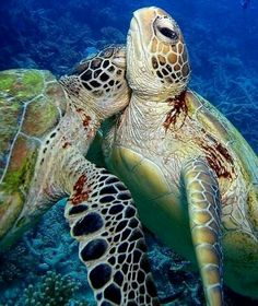 Sea turtles huggin'