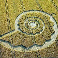 :::: PINTEREST.COM christiancross ::::golden spiral crop circle