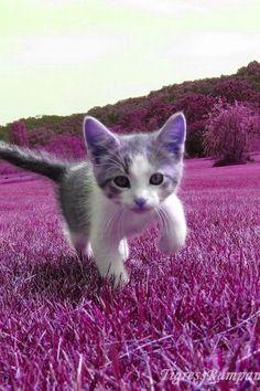 Cute little kitten in purple!