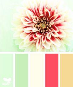 petal palette by design seeds
